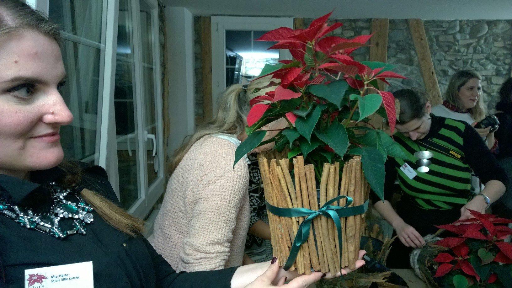 Weihnachtsstern gestallten bei Grayling