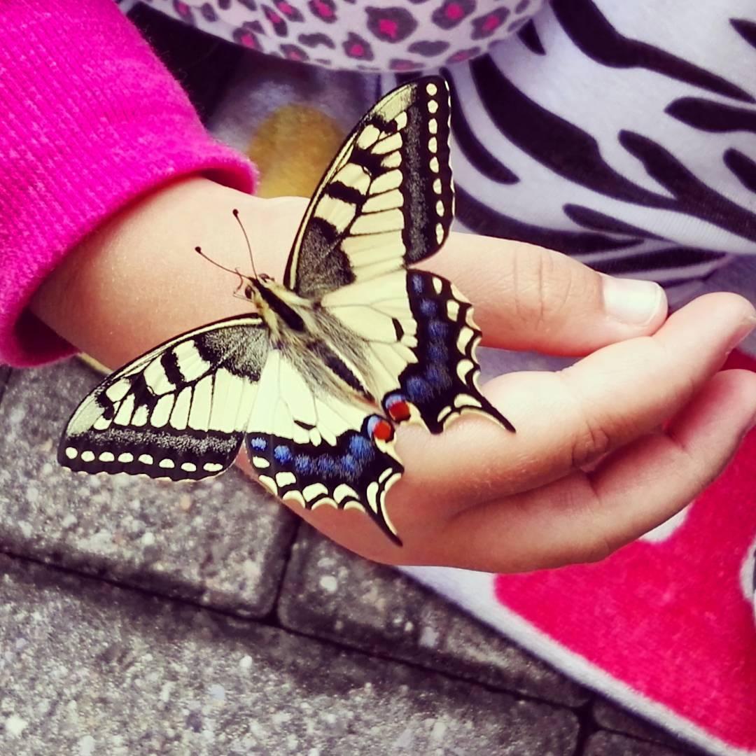 Heute morgen ist unser erster Schmetterling geschlpft Schmetterling Tier Butterflyhellip