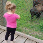 Unsere kleinste beim bestaunen der Büffel