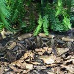 Noch mehr Schlangen