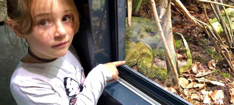 Aquatis – hier lernt ihr viel über Fische den Genfersee und die Gesichte rund herum